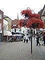 Floral display, Salisbury - geograph.org.uk - 885511.jpg
