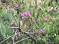 Flores. - panoramio (2).jpg