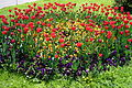 Flower-bed-Moscow.JPG
