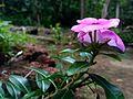 Flower 123.jpg