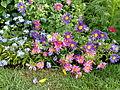 Flowers - 4.jpg