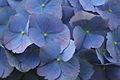 Flowers 7 - West Virginia - ForestWander.jpg
