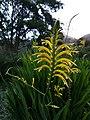 Flowers at Kirstenbosch botanical garden, Cape Town 29.jpg
