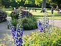 Flowers in Hyde Park (14047224560).jpg