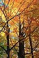 Foliage Walk (7) (30264537901).jpg