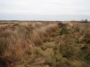 Humberhead Levels - A footpath through the Humberhead nature reserve