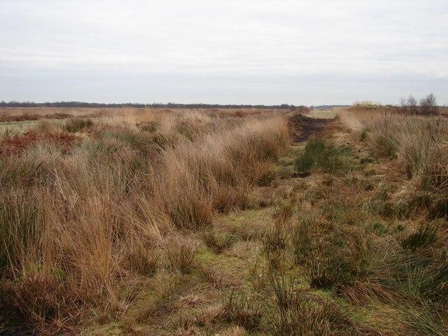 Footpath Through the Humberhead Peatlands - geograph.org.uk - 645204