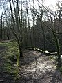Footpath adjacent to brook in Woodhey - geograph.org.uk - 374959.jpg