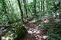 Forest @ Roc de Chère @ Talloires (35477345052).jpg