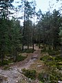 Forest Trail - panoramio (1).jpg