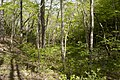 Forest in Mt.Nabeashi 10.jpg