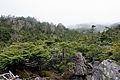 Forest in Yatsugatake 14.jpg