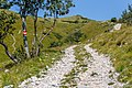 Forest road to Planinarski dom Hahlić, Risnjak National Park, Croatia.jpg