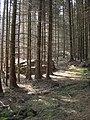Former roadway from Rhiwddolion to Bwlch Gwyn Quarry - geograph.org.uk - 405560.jpg