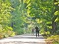 Forst Grunewald - Kronprinzessinnenweg (Grunewald Forest - Crown Princesses Way) - geo.hlipp.de - 41354.jpg