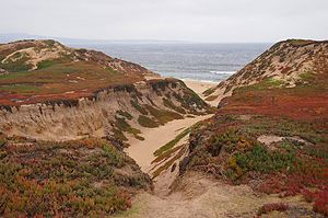 Fort Ord Dunes State Park - Coastal dunes at Ford Ord Dunes State Park