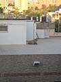 Frog on the roof (4075933709).jpg