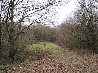 Fryent Country Park - Image: Fryent Country Park clearing