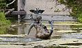 Fuente, Tierpark Hellabrunn, Múnich, Alemania, 2012-06-17, DD 03.JPG