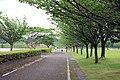 Fukui Prefectual Road Route 803.jpg