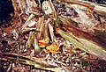 Fungi on The Plain - geograph.org.uk - 384070.jpg
