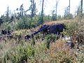 G. Novouralsk, Sverdlovskaya oblast', Russia - panoramio (115).jpg