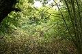 Garden-abandoned-20-years-3.jpg
