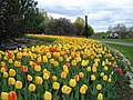 Garden of the Provinces and Territories - Tulip Festival - 4.jpg