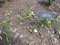 Gardenology-IMG 5013 hunt10mar.jpg