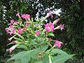 Gardenology.org-IMG 2527 rbgs11jan.jpg