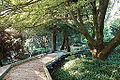 General view - San Francisco Botanical Garden - DSC00053.JPG