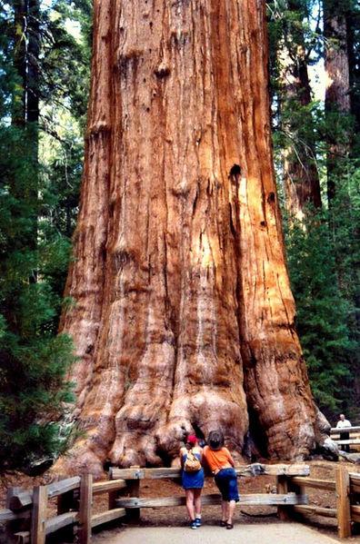 Sa Invatam Din Toate Cel Mai Mare Copac Din Lume