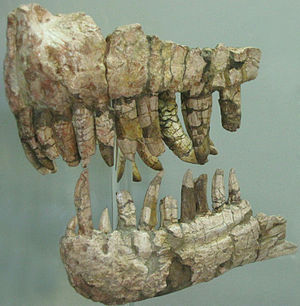 1901 in paleontology - Genyodectes serus