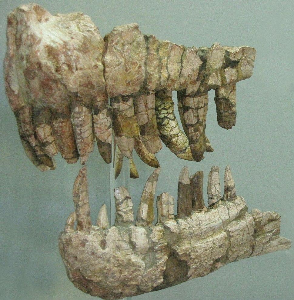 Genyodectes saurus jaws