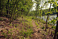 Gfp-missouri-cuivre-river-state-park-trail-by-thelake.jpg