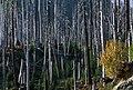 Gifford Pinchot National Forest, Mt St Helens NVM-7 (36338780554).jpg
