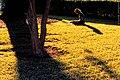 Girl on lawn (3639471320).jpg