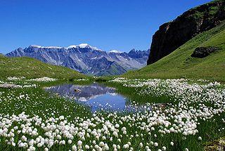 Piz Segnas mountain in the Glarus Alps