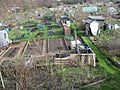 Gledhow Valley Allotments 18 March 2019 7.jpg