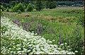 Glen Coe. - panoramio (1).jpg