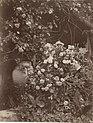 Gloeden, Wilhelm von (1856-1931) - n. 2594 - Giara con fiori - Sehnsucht p.72 - ex collection Levy - recto.jpg