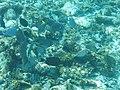 Glover's Reef 2-14 (33116434685).jpg