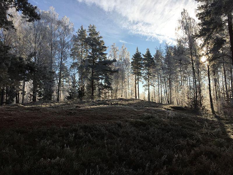 File:Gravfält Teleborgsskogen.jpg