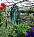 Great Swamp Greenhouse photos coiled watering hose close in.JPG