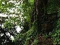 Green Planetopia.JPG