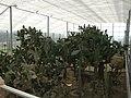 Greenhouses Queen Mary Balchik - panoramio.jpg
