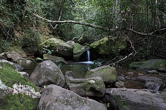 Grose Valley - A stream in the Grose Valley.