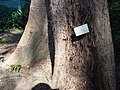 HK CWB 銅鑼灣 Causeway Bay 維多利亞公園 Victoria Park tree trunk n green leaves December 2019 SSG 24.jpg