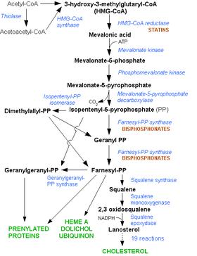 Pharmacology simvastatin