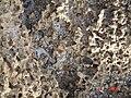 HaBonim-Dor beach reserve DSC00519.JPG